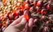Aceite de Palma: Una grasa oculta no saludable
